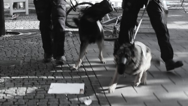 Hundar 13vKungsan 2014